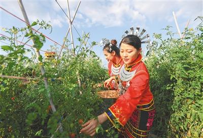 第五届陵水(光坡)圣女果采摘季开幕