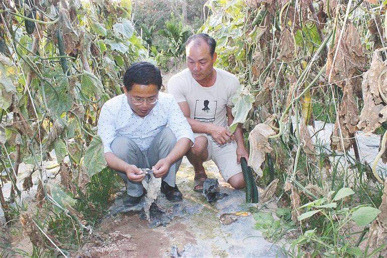 三亚南繁研制和推广全生物降解地膜